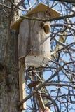 Installing a self-made Bird House. Stock Photos
