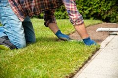 Installing turf rolls in the garden stock images