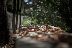 Instant autumn Royalty Free Stock Images