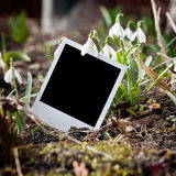 Instant film frame and few snowdrops Royalty Free Stock Photo