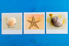 Instant Frames of Starfish and Seashells Royalty Free Stock Image