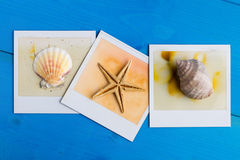 Instant Frames of Starfish and Seashells Royalty Free Stock Images