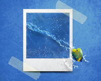 Instant photo. Fish jumping out of photo with water splashes Royalty Free Stock Image