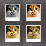 Instant photos with cat Royalty Free Stock Image