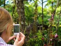 Instantané dans un jardin tropical Images libres de droits