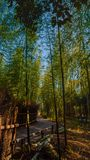 Arashiyama Bamboo Forest royalty free stock photos