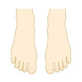 Instep and toe. Top of the foot. Instep and toe Royalty Free Stock Images