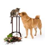 Instigadores do gato e do cão Fotografia de Stock
