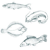 inställda fiskar Royaltyfria Bilder