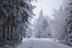 Instradi nella foresta bianca 1 Fotografia Stock Libera da Diritti