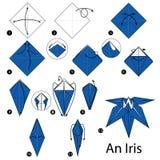 Instrucciones paso a paso cómo hacer papiroflexia un iris Foto de archivo
