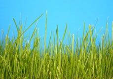 Instruction-macro #2 d'herbe photo stock
