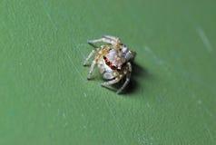 Instruction-macro d'araignée Photos libres de droits