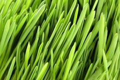 Instruction-macro d'herbe verte photos stock