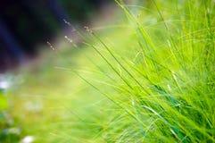 Instruction-macro d'herbe verte Images stock