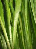Instruction-macro d'herbe verte photographie stock