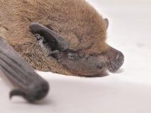Instruction-macro de 'bat' Images stock