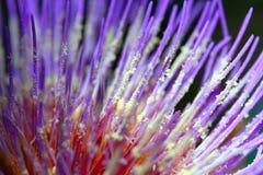 Instruction-macro de belle fleur Photographie stock