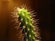 Instruction-macro de cactus Photos libres de droits