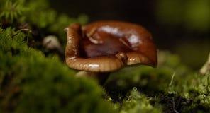 Instruction-macro de champignon de couche photos libres de droits