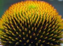 Instruction-macro de fleur Image libre de droits