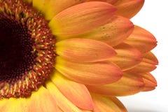 Instruction-macro de fleur d'isolement sur le blanc Photos stock