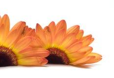 Instruction-macro de fleur d'isolement sur le blanc Image libre de droits