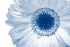 Instruction-macro de fleur d'isolement sur le blanc Photographie stock libre de droits