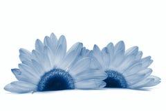 Instruction-macro de fleur d'isolement sur le blanc Photo libre de droits