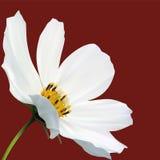 Instruction-macro de fleur de cosmos illustration de vecteur