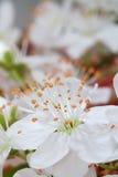 Instruction-macro de fleur de source Photo stock