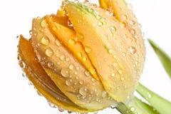 Instruction-macro de fleur fraîche Photographie stock