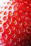 Instruction-macro de fraise Photographie stock libre de droits