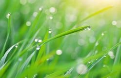 Instruction-macro de goutte de pluie photos libres de droits