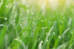 Instruction-macro de goutte de pluie image libre de droits
