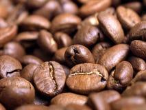 Instruction-macro de grain de café photos libres de droits