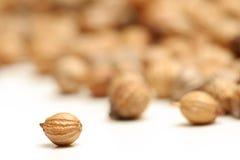 Instruction-macro de graine de coriandre Photo libre de droits