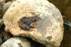 Instruction-macro de grenouille Photo libre de droits