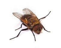 Instruction-macro de la mouche à la maison images stock