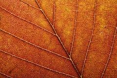 Instruction-macro de lame d'automne Image libre de droits