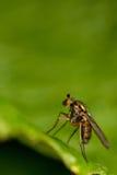 Instruction-macro de mouche Photo libre de droits