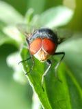 Instruction-macro de mouche d'insecte Photos libres de droits
