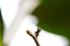 Instruction-macro de mouche sur le fond Photos libres de droits
