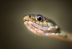 Instruction-macro de serpent photo stock