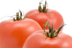 Instruction-macro de tomate Image libre de droits