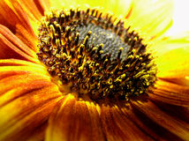 Instruction-macro de tournesol images libres de droits