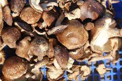 Instruction-macro des champignons de couche plats organiques Photographie stock