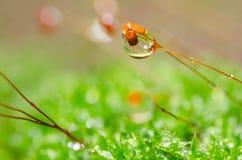 Instruction-macro frais de mousse en nature verte Photo stock