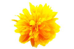 Instruction-macro jaune de fleur Image stock