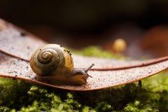 Instruction-macro renversant d'escargot de jardin commun Image stock